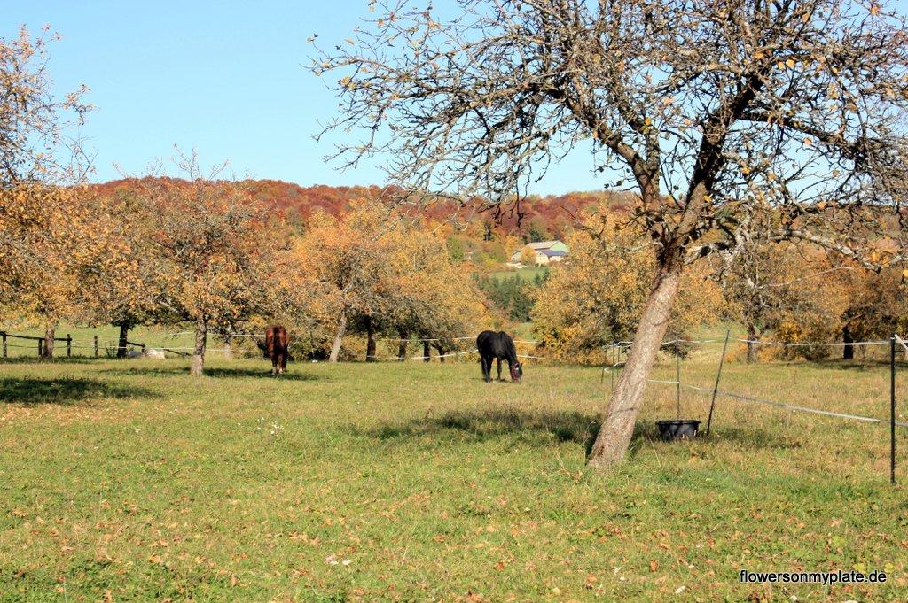 Pferde im Herbst_flowers on my plate